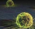 cancer_celula-580x3261
