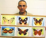 antonio-guerrero-mariposas