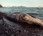 exxon-valdez-ballena