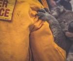 koala-se-salva-de-incendio-807336-1-580x325