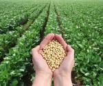 soya-ciencia-agricultura-580x395