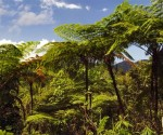 Felci giganti nel Parco Nazionale Alejandro de Humboldt. Foto: DPA